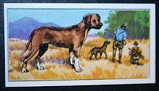 RHODESIAN RIDGEBACK   Original Vintage  Coloured Card  VGC