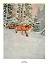 """1957 Vintage FRANCIS LEE JAQUES """"RED FOX"""" GORGEOUS Color Art HUNTING Lithograph"""