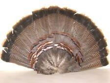 Pennsylvania Turkey Tail Fan