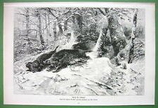 WILD BOARS Hunted in Winter Forest - VICTORIAN Antique Print