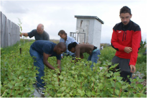 Volunteer at Our Tree Production, Research & Training Farm at Weyburn, SK. Canad