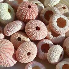 4 Pieces Natural Sea Urchin Shells Delicate Durable Shells Pineapple Plants D0A1