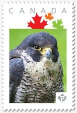 HAWK = Closeup = Personalized Picture Postage stamp MNH Canada 2018 [p18-07s13]