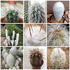 100 semi in miscuglio di Oreocereus mix ,piante grasse,seeds cactus mix