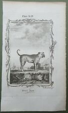 Bulldog Antique Print Copper Plate Engraving Natural History Buffon 1791