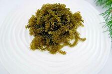 Sea Grapes/Green Caviar/Umibudo/Latô/Arosep/Latok - Free Shipping - Vegan
