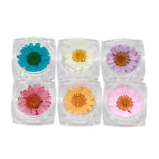 12 PCS Dried Dry Daisy Real Flower With Pot 3D Nail Art Tips DIY Decoration
