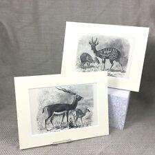Antique Engraved Prints Black Buck Deer Antelope Guib Ca. 1894