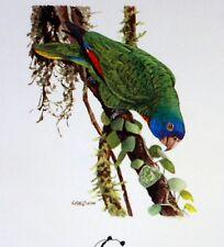 Dominica WWF Uccelli of the Caraibi BUSTA Primo Giorno 1° FDC 830