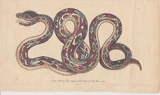Erpetologia, Serpente, XIX secolo