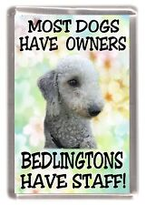 "Bedlington Terrier Dog Fridge Magnet "".....Bedlingtons Have Staff!"" by Starprint"