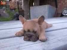 A FRENCH BULLDOG SLEEPING PUPPY FIGURE, HOME OR GARDEN, VIVID ARTS PET PALS