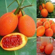 GAC Momordica cochinchinensis gak fruit rare exotic vine plant aloe seed 6 SEEDS