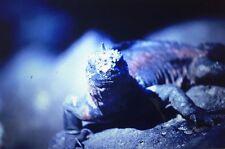 1981 Galápagos Islands Animal Nature Birds Travel Lot 35mm Slide Galapagos Seal