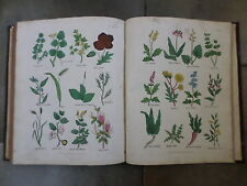 1815 book ~ Culpeper's Complete Herbal : English Physician