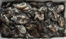 Cuttlefish -  4kg Block - Frozen Dead Sea Bait - Fishing Bait