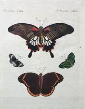 """Carl Bertuch """"Schöne ausländische Schmetterlinge"""" Kolorierte Kupferstich um 1810"""