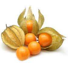100PCS Physalis Seeds Garden Fruit Flower Latern Golden Berry Tree Seeds