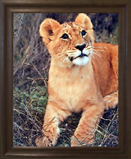 Lion Cub Big Cat Wild Animal Brown Rust Framed Art Print Picture (19x23)