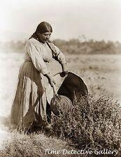Pomo Woman Cecilia Joaquin Gathering Seeds, California - Historic Photo Print