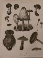 Mushrooms: Various kinds / Poisonous: Encyclopaedia Londinensis V.16