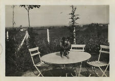 PHOTO ANCIENNE - VINTAGE SNAPSHOT - ANIMAL CHIEN TABLE JARDIN COURONNE - DOG
