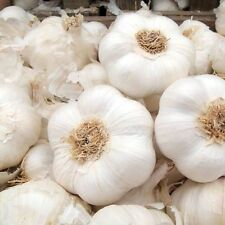 50 FRESH Garlic cloves From 6 Garlic Bulbs - EU crop