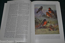 1936 magazine article about THRUSHES, THRASHERS, AND SWALLOWS, birds, color art