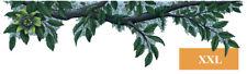 Bordüre Dschungel Pflanze grüne Blüten Pflanzen Ranken Regenwald 30 x 111 cm