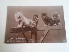 "Vintage Postcard Cute Kittens / Cats ""UP TO MISCHIEF"" Dated 1911  §A2844"