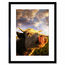 Photo Animal Composition Cow Lick Cattle Head Framed Print 9x7 Inch