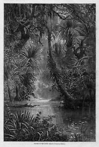 WINTER IN THE SOUTH CYPRESS SWAMP LILY PADS PALM TREES BY GRANVILLE PERKINS