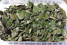 ** WILD GREEK Capers leaves 150g quality hand-picked - rare **