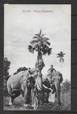 E7944 Ceylon Postcard elephants wild animals cultures ethnics