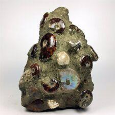 "8.18"" 4277g Natural Ammonite Fossil Shell+sea-mud sedimentation Specimen A802"