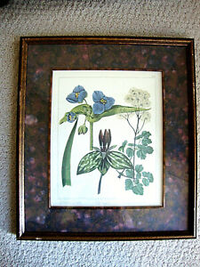 Vintage Bombay Company Botanical Framed & Matted Print 14.5 X 13 Inches