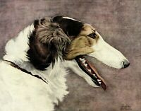 1930s Antique BORZOI Dog Print Geoffrey Williams Art Russian Wolfhound 3849d