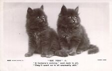 "c. 1925,Real photo, Great Persian Kittens, ""We Two"" Old Post Card"