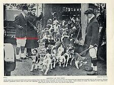 Horsell Park Beagles BEAGLE dogs arriving at the meet   VINTAGE Photo Print 1934