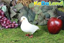 Feather White Pigeon Adorable Furry Animal Taxidermy Figurine plush Decor Cabin