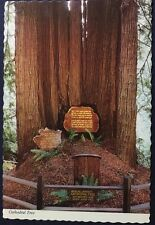 Cathedral Tree Trees Of Mystery Redwood Highway California Vintage Post Card