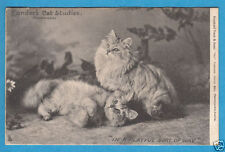 Raphael Tuck & Sons Cat Collectable Animal Postcards