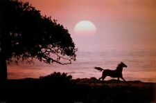 HORSE RUNNING AT SUNSET - POSTER - 24x36 NATURE SCENIC OCEAN 36046