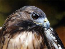Red Alert Hawk Carl Brenders Portrait Limited Edition Print New Mint Rare