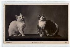 (Sc393-100)  Cats, So Near & Yet So Far,1910,used ,Vg