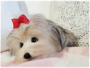 Shi Tzu Mix Dog Sewing Pattern , 8  Inch