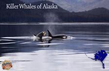 Killer Whales of Alaska Orca Illustrated Card