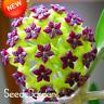 Hoya Flores Potted Bonsai Flowers Plants Orchid Home Floriculture 100 PCS Seeds