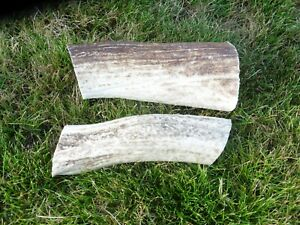 2 medium antler dog chews, 12cm long, 290 grams combined weight