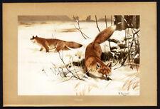 Antique Print-Fox-Mammals-Brehm-1 890